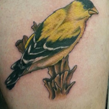 Tattoo by Steve – Gold Finch